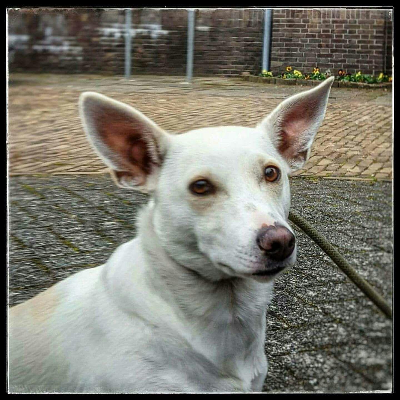 Caya, het hondje dat naar alles uitviel